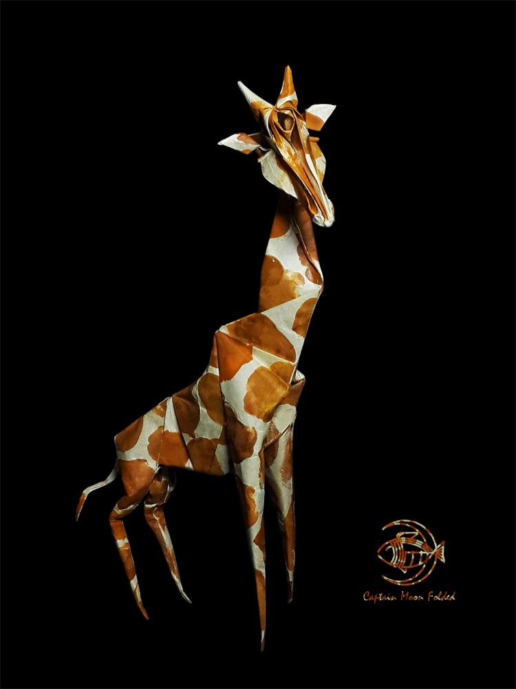 长颈鹿Giraffe
