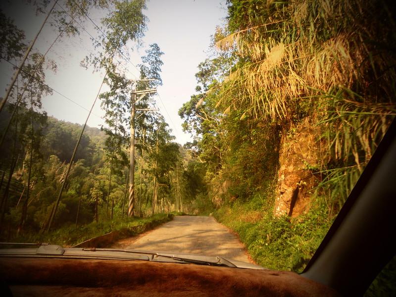 Taiwan Island trips。Couchsurfing。環島景點。南投秘境。忘憂森林。17度C隨拍。  (17)