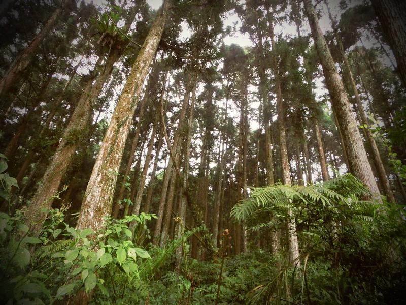 Taiwan Island trips。Couchsurfing。環島景點。南投秘境。忘憂森林。17度C隨拍。  (9)