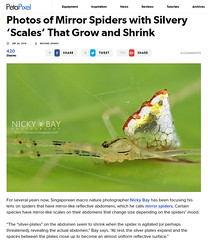 Photos of Mirror Spiders with Silvery 'Scales' That Grow and Shrink