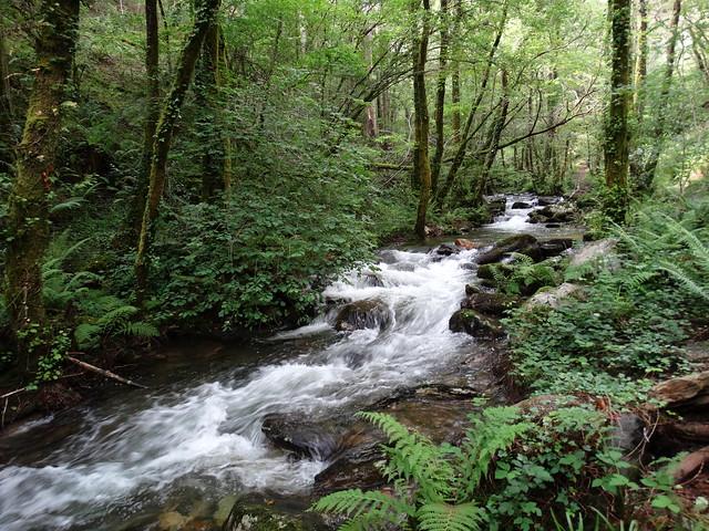 Rego da Mazoca o río Sesín en las Fragas Do Eume