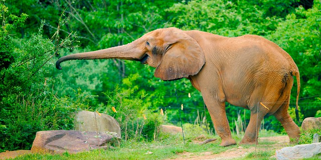 Elephant_6