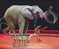 gran-circo-alaska
