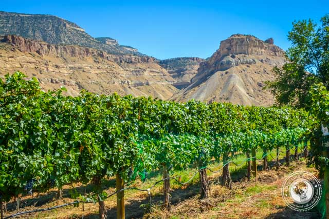 Palisade Colorado Wine Country