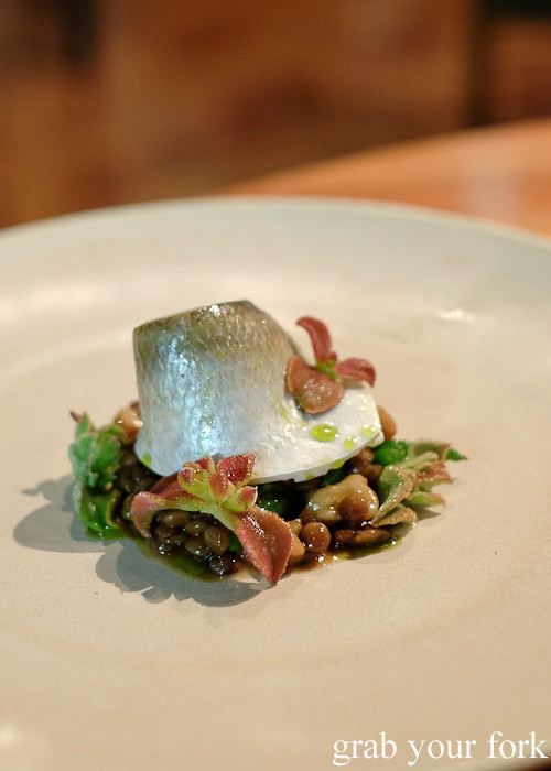 Coorong mullet, red lentils, walnut and ice plant at Restaurant Orana, Adelaide