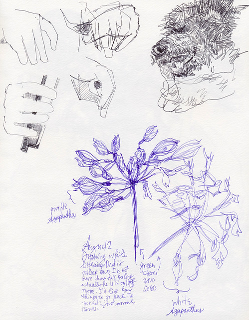 Sketchbook #99: Agapanthus, Dog and Cello Hands