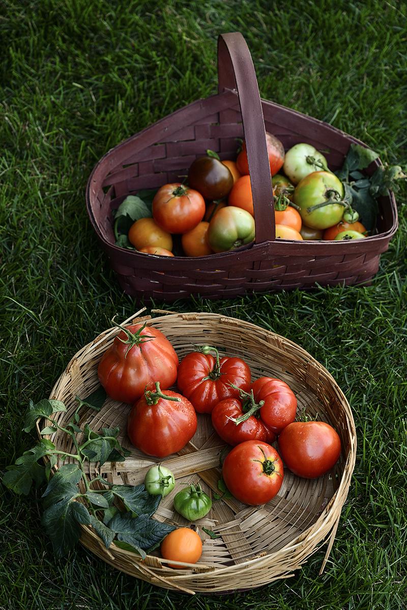 Tomatoes-herloom-800PX-SimiJois-2016