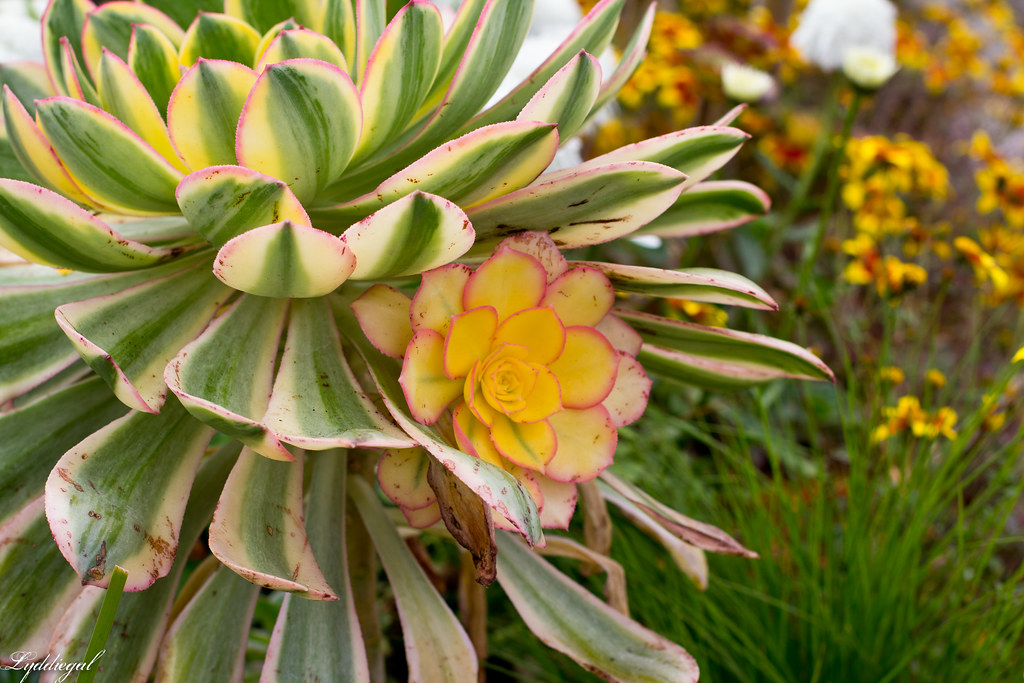 flower and succulent garden-1.jpg
