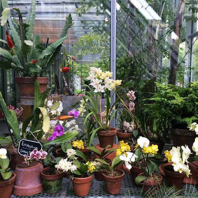 One more, because I'm a #crazyplantlady and the Gardner greenhouse is 😍. #bostonsummer