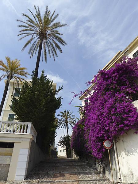 palmier et bougainvillée