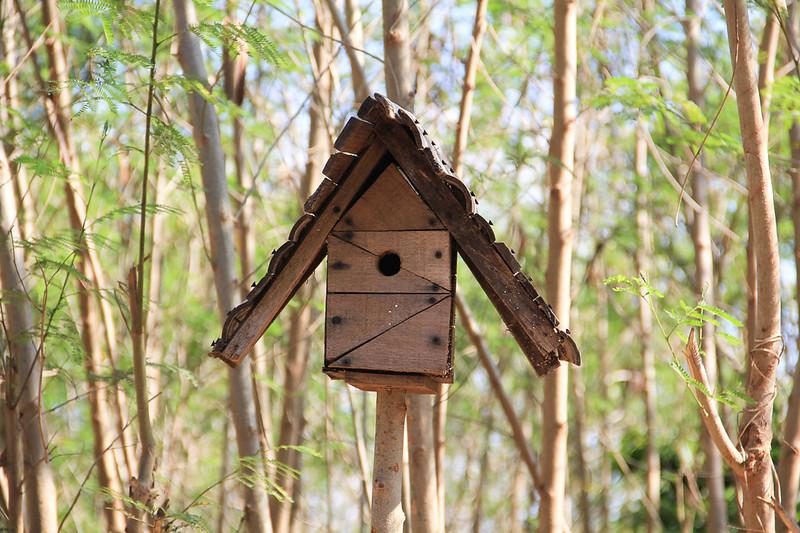 Birdland Bolinao_176