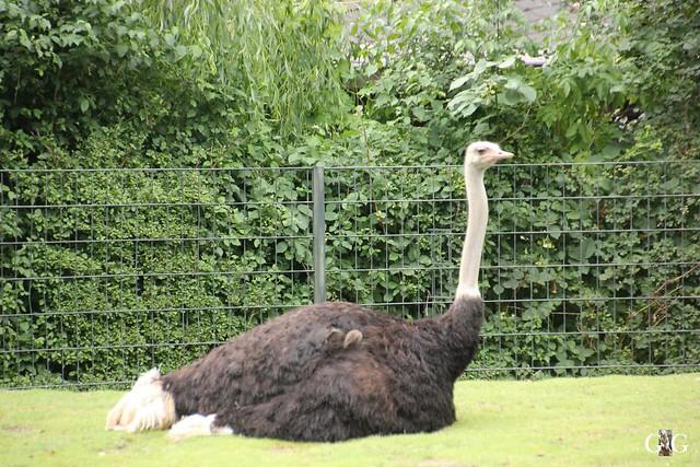 Sonntags-Besuch Zoo Berlin 03.07.201631