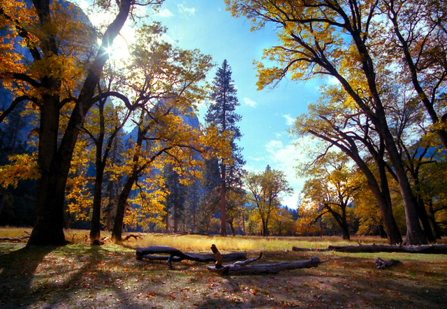 Yosemite in the Fall 12
