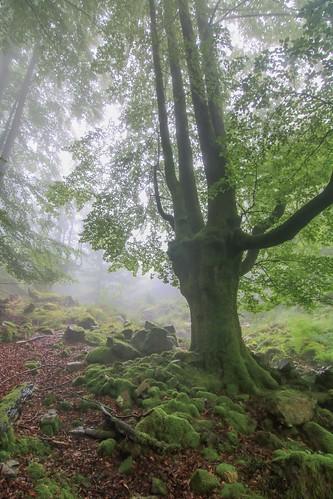 Parque Natural de #Gorbeia #Orozko #DePaseoConLarri #Flickr - -625
