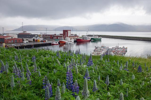 Near Patreksfjörður