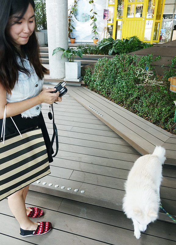 the commons thonglor jean dog