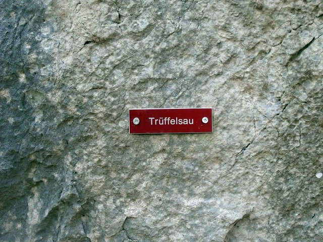 Hohe Wand Trüffelsau 215 m (7)