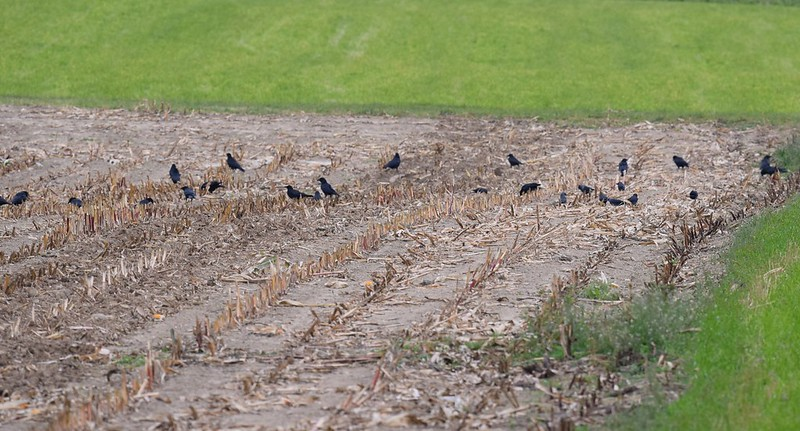 Crows 07.10 (10)