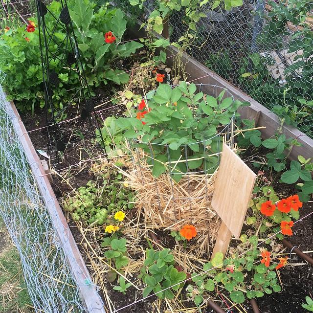 Weed gardening