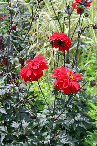 Flowers in Amiens