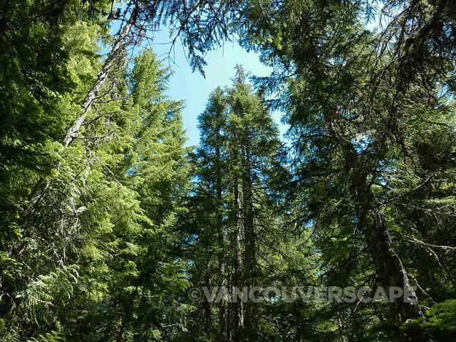 Trillium Lake hike