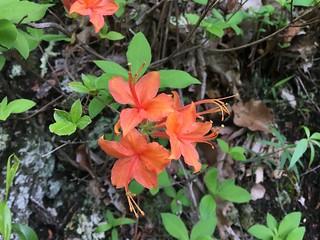 Flower on Pond Flats