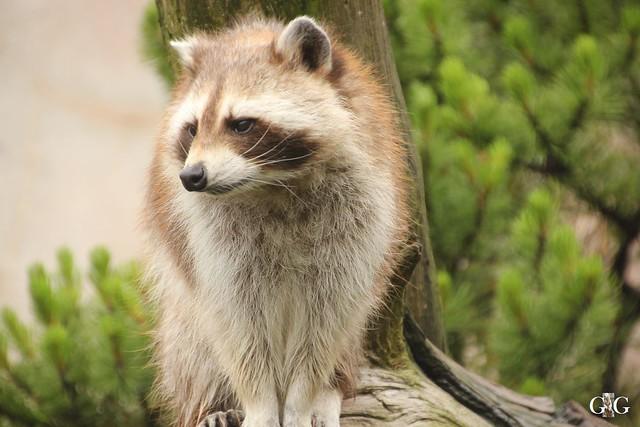 Besuch Zoo am Meer 25.06.201634