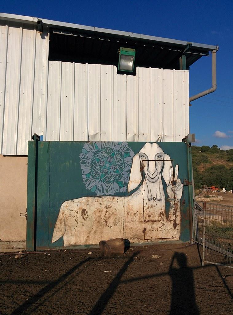 Коза строит козу