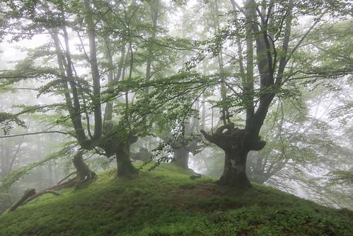 Parque Natural de #Gorbeia #Orozko #DePaseoConLarri #Flickr - -613