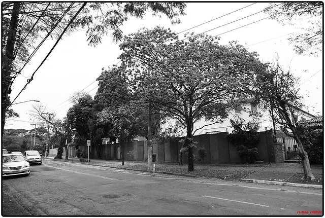 Vila Leopoldina  Foto: Flávio Cabral