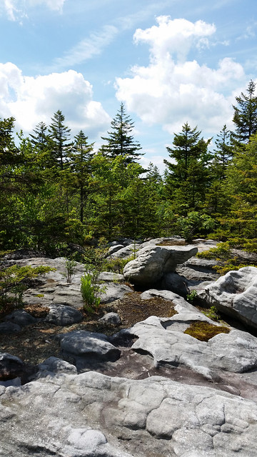 20160618_Cranberry_Wilderness_038