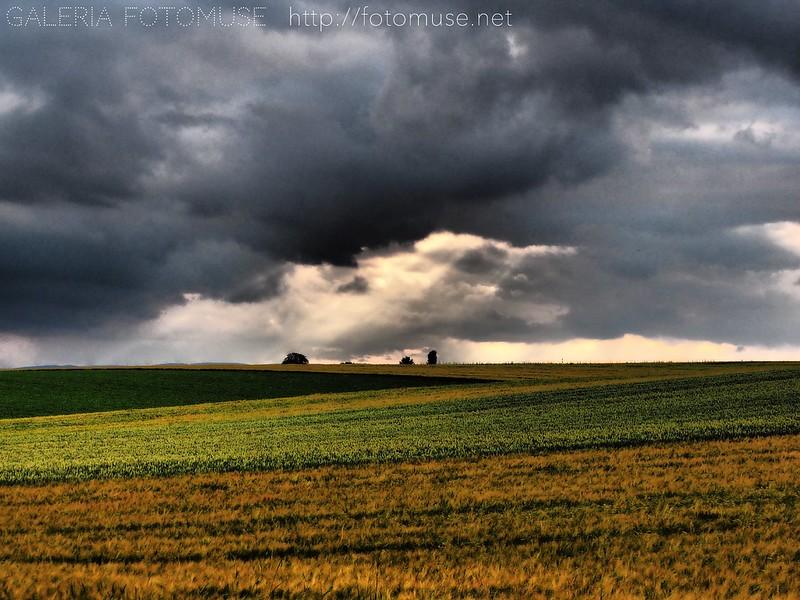 Romantic fields
