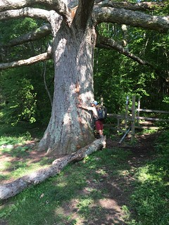 Sneaky Pete hugging the biggest Oak on the southern AT