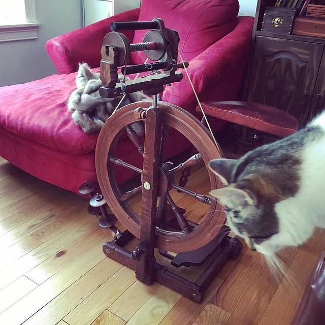 New used wheel for the next spinning project. This Kromski Sonata uses scotch tension and I'm used to double-drive. Haha, and I don't have to you what THAT means, ammirite? #tdf #kromski #spinningwheel #teamcatitude