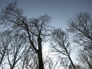 ams182oosttrees