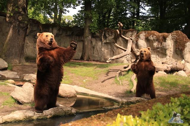 Tierpark Hagenbeck 21.05.2016  060
