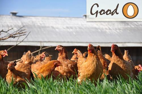 vega-farm-good