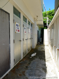 コマカ島-2016-06-19-31