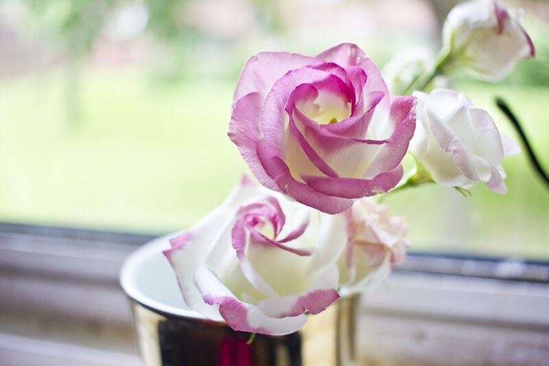 flowers in vase, flowers, floral, pretty