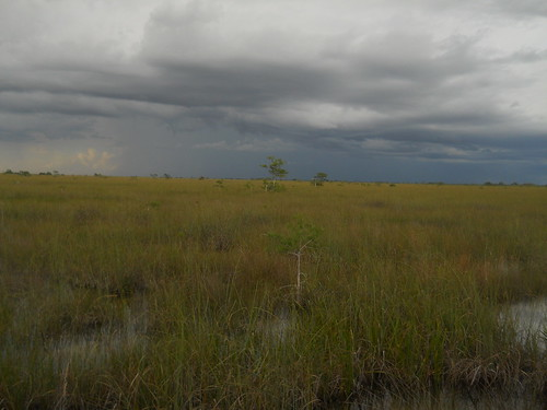 storm on the horizon, Everglades