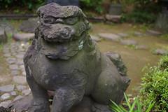 Snapshot in Koishikawa Korakuen