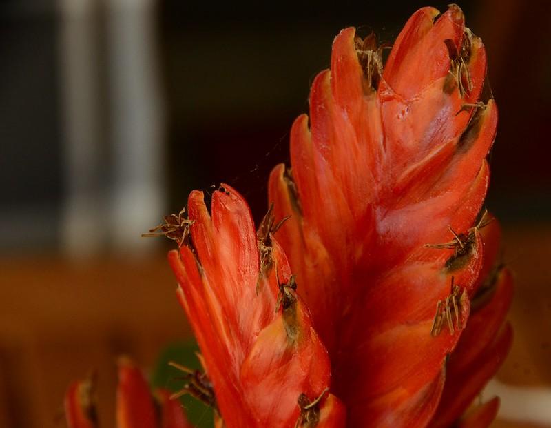 Bromelia 14.08 (5)