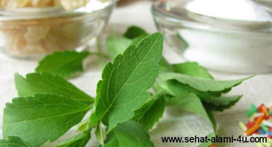 Manfaat Stevia Sweetener Bagi Pengobatan