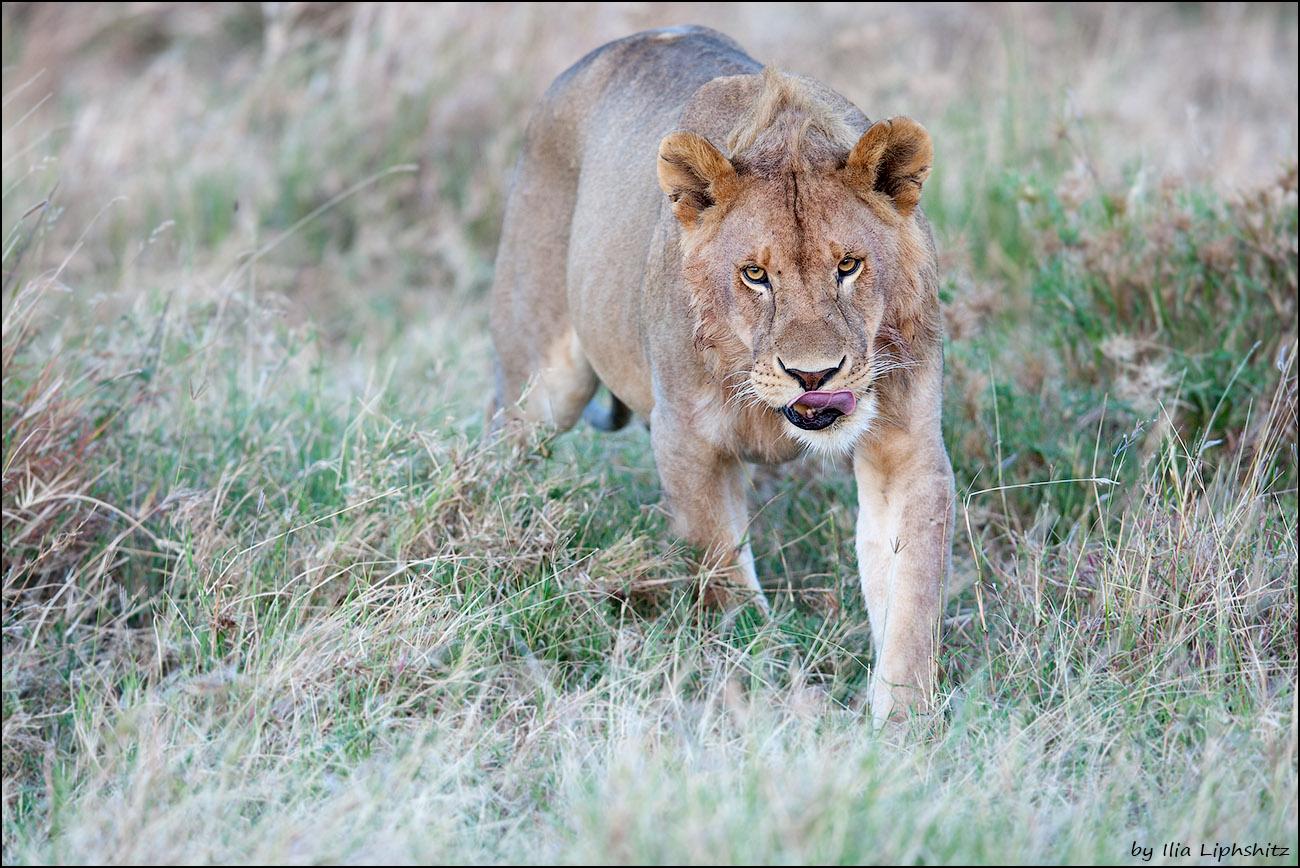 2016-06-30_1D_Serengeti_070_web