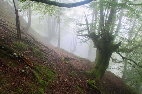 Parque Natural de #Gorbeia #DePaseoConLarri #Flickr - -853