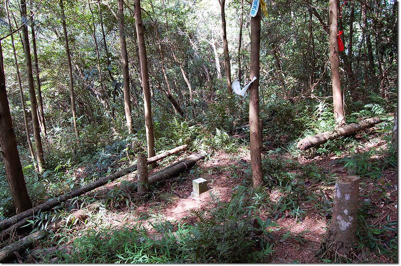 內楓仔林山山字森林三角點(Elev. 740 m) 2