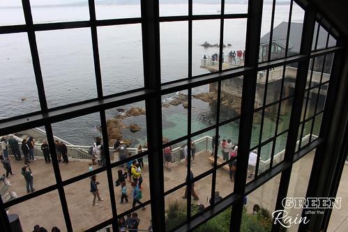 160703f Monterey Bay Aquarium _040