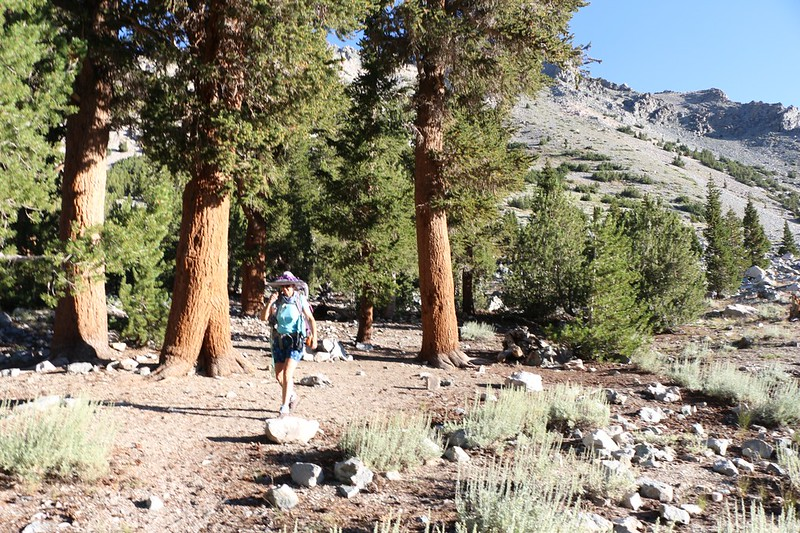 The campsite is packed and clean, and we're heading back down to the car in Onion Valley