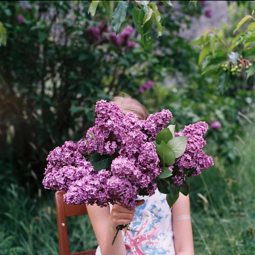 Hasselblad summer