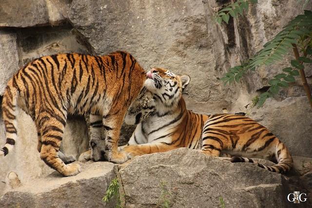 Besuch Tierpark Friedrichsfelde 20.07.201686